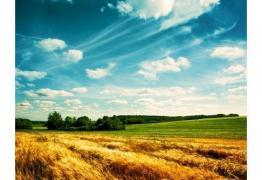 Купувам земеделска земя всички землища област  Kюстендил