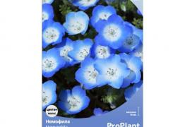 Немофила, ProPlant, 2 гр