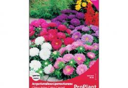 Астри Китайски Цветен Килим, ProPlant, 0.8 гр